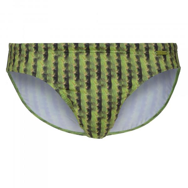 Cactus Stripes - Mini